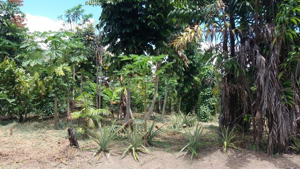 1 hectare de agrofloresta