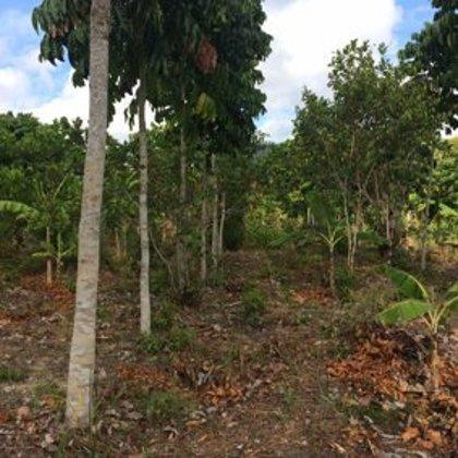 25 m2 Agroforst